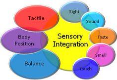 Various sensations contributing to sensory integration.