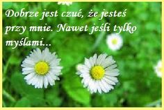 I Miss You, Motto, Wish, Funny Quotes, Herbs, Messages, Humor, Day, Anna