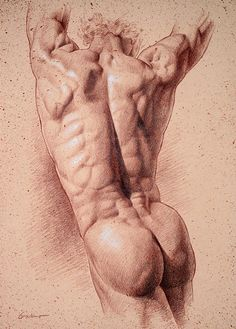 Sepia Torso, Pencil on sepia toned paper, by  Victor Gadino