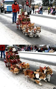 The Huskies:D