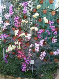 Orchid wall,would be nice to do this is a green house :)