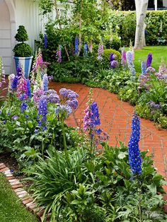 Having a beautiful garden in the early summer doesn't mean you have to plant a rainbow of colors. Instead, make a bigger impression by sticking with different versions of the same color. For example, only five species that flower in shades of blue, purple, and lavender were included in these narrow borders. Delphinium, foxglove, allium, agapanthus, and sea lavender are a blue ribbon combination.