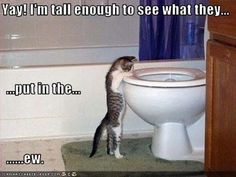 Attack Of The Funny Animals - 40 Pics