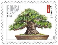 Bonsai- one of the newest USA issues