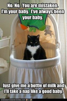 The current battle at my house for the bassinet between our new human baby vs. the five cat babies