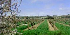 Rusden Wines- in the beautiful Barossa Valley.