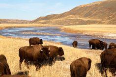South Dakota-Badlands