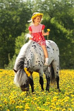Pony of the Americas with a little girl in a field of yellow flowers.   Katarzyna Okrzesik Photography