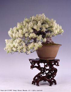 Logo d'entretien du jardin Logo d'entretien du jardin - MyStyles Ikebana, Bonsai Azalea, Plantas Bonsai, Juniper Bonsai, Bonsai Styles, Greenhouse Gardening, Bonsai Garden, Tree Forest, Garden Care