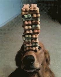 equilibrista!