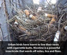 Smart birds...