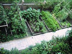 Small Vegetable Garden Layout | small vegetable garden design, garden, garden ideas