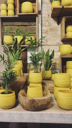 Yippee!! We have lots of glorious new pots in stock, perfect for bringing some colour into your home on this rather grey Wednesday morning! #N1GardenCentre #Islington #Lifenhancing #interiordesign #hackney #debeauvoir #houseplants #yellow