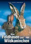 Osterhasen-Quiz: 15 Rätselfragen für Kinder und Erwachsene Quiz, Rabbit, Animals, Kids, Easter Bunny, Entertaining, Easter, Games, Animales