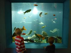 Wasserbillig Aquarium, Wasserbillig, Luxembourg