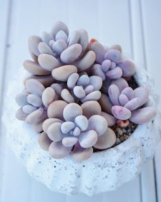 Graptopetalum Amethystinum by sarah_succulents Succulent Outdoor, Succulent Gardening, Succulent Care, Succulent Terrarium, Garden Plants, Indoor Plants, House Plants, Indoor Herbs, Indoor Gardening
