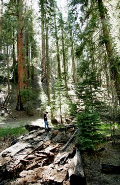 Kings Canyon National Park, CA.