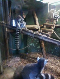 Zoo Trip 2014