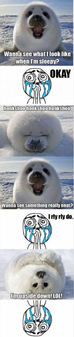 Baby Seal Having Fun