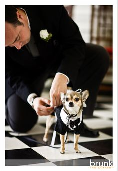 My chihuahua is going to be one of my ring bearers...