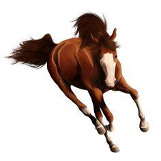 Divin Maskerad, Pferd Orlow-Traber Apfelschimmel #8643404 - Howrse Horse Drawings, Animal Drawings, Art Drawings, Pretty Horses, Beautiful Horses, Horse Animation, Horse Artwork, Breyer Horses, Equine Art