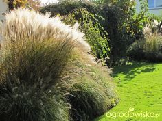 Pokażę nasz ogród - strona 340 - Forum ogrodnicze - Ogrodowisko
