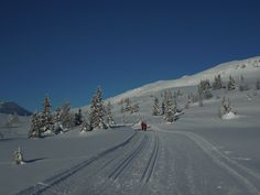 On the Svartfjell Rundtloipe Skiing, National Parks, Outdoor, Ski, Outdoors, Outdoor Games, The Great Outdoors