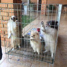 Sunny Boy, Cléo e Bluebell