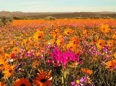 Namaqualand in Northern Cape