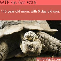 Facts about animals, intersting animals information WTF Facts ...