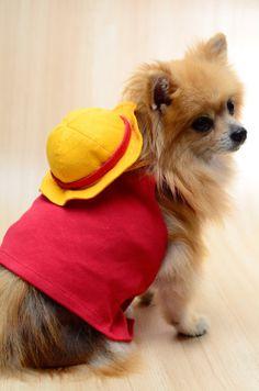 Luffy #dog #pomeranian #onepiece