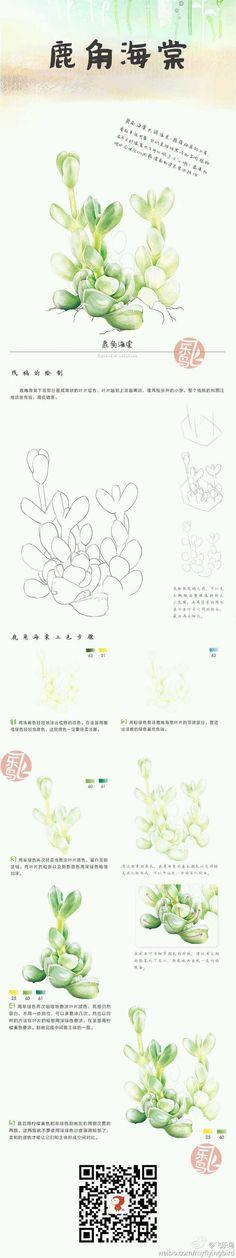 鹿角海棠 手绘 多肉 飞乐鸟@wawa0962采集到多肉植物(89图)_花瓣