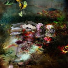 Gorgeous and Expressive Portraits of Flowers by Isabelle Menin - My Modern Metropolis