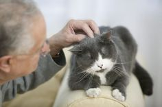 Senior pets deserve great homes, too! This is a pawsome list of 7 reasons you should consider adopting a senior cat. >^..^
