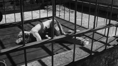 La Leggenda di Kaspar Hauser // Laceno d'oro '14