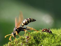 ant strength by Vadim Trunov on 500px