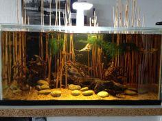 Lnummer Amstelveen biedt aan:  Biotoop Aquarium ( Peru oever aqua )  - Aquarrium 60 cm. - Superfish Lamp. ( qube led 40 ) - Pomp. - Verwarming - Driftwood. - Riet. - 15 Citroen tetra's - Hyphessobrycon Pulchripinnis. - 2 Microgeophagus Altispinosa. - Mos  Een zeer mooi biotoop aquarium met alles erop en eraan, voor een zeer scherpe prijs van € 100,-