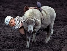 @Callie HollowayMutton Busting--my babies are sooo doing this; the cutest thing like everrr!!