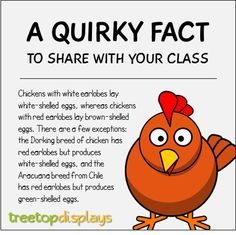 A quirky fact about chickens to share with your class - from Treetop Displays. Visit our TpT store for printable resources by clicking on the provided links. Designed by teachers for Pre-Kindergarten to Grade. Fun Facts For Kids, Fun Facts About Animals, Animal Facts, Wtf Fun Facts, Funny Facts, Farm Facts, Chicken Facts, Secret Crush Quotes, Animal Adaptations