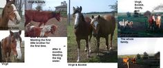 I got my horse, Virgil, because I was going to school for horse training. When I saw him I knew I had to save him. He only weighed about 400 pounds as a 15 hand two year old. I started to provide love and food.   It's been over a year and my boy has taken an amazing turn for the better. That sad little colt who was afraid of anything. He turned into my best friend and is full of life and spirit. He now has a comfortable  life and pals.  Needless to say, TC saved my boy from a very sad life.
