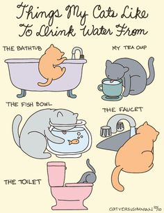 Not so much their water bowl.