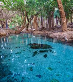 That blue is the true colour of the water at Mataranka Hot Thermal Pools in Bitter Springs, Australia.