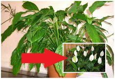 Pri čistení záhrady nevyhadzujte drevo a vetvičky: 20+ krásnych nápadov na jarné inšpirácie zo starého dreva! Herbs, Plants, Compost, Herb, Plant, Spice, Planting, Planets