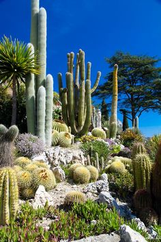 80 Stunning Rock Garden Landscaping Design Ideas - Flowers, Blossoms and Plants - Cactus Cacti And Succulents, Planting Succulents, Cactus Plants, Cactus Art, How To Plant Cactus, Green Plants, Rock Garden Plants, Dry Garden, Cacti Garden