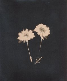 the fascinating sunprints of photographer Jennifer Glass Anderson | Andersen+Glass Studios ...almost as if it is an x-ray, you can see the construction...