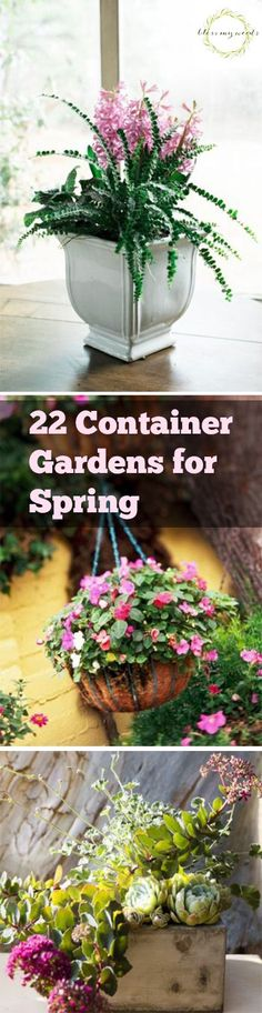 22 Container Gardens for Spring