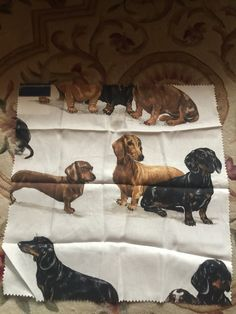 Dotson dog fabric by kravet. Design by Barclay Butera by FrenchCountryGirl on…
