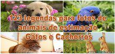 123 legendas para fotos de animais de estimação - Gatos e Cachorros >> http://www.tediado.com.br/06/123-legendas-para-fotos-de-animais-de-estimacao-gatos-e-cachorros/