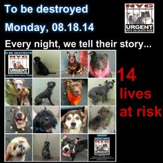 14 innocent lives are scheduled to end tomorrow at Noon. Please share their stores everywhere to help give them a future. This is a VERY VERY high kill facility, so time is URGENT!!  To rescue a Death Row Dog, Please read this: http://urgentpetsondeathrow.org/must-read/ To view the full album, please click here:    https://www.facebook.com/media/set/?set=a.611290788883804.1073741851.152876678058553&type=3