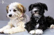 Chyna and Castle, Both Chinese Crested Powderpuffs Chinese Crested Powder Puff, Sweet Sweet, Beautiful Dogs, Dog Life, Castle, Hearts, Face, Animals, Cute Dogs